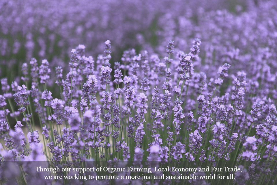 lavender-lovely with cap.jpg