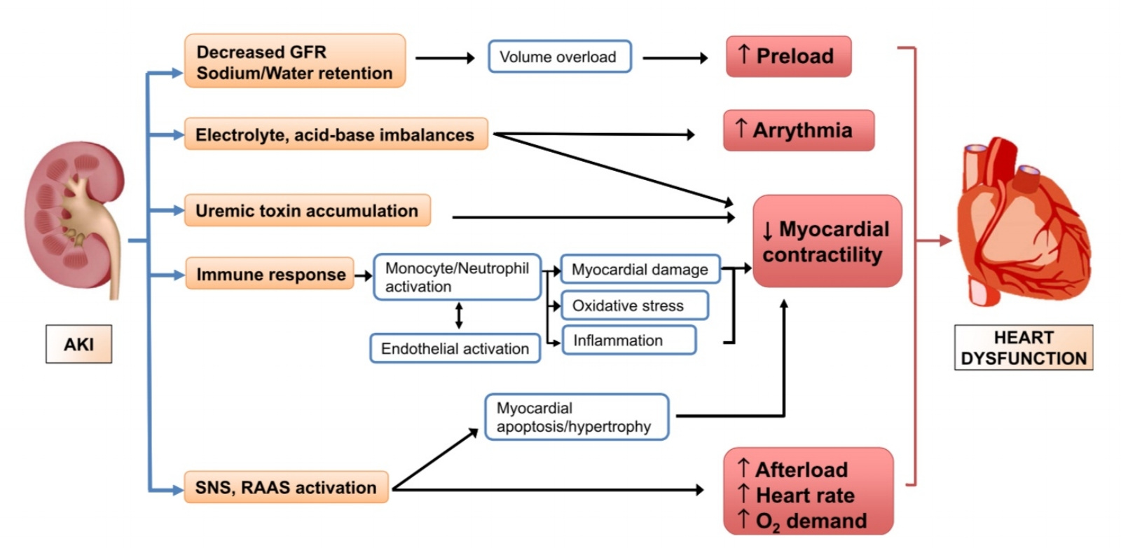 Kidney-Heart Axis (adapted from Lee et al. 2018)
