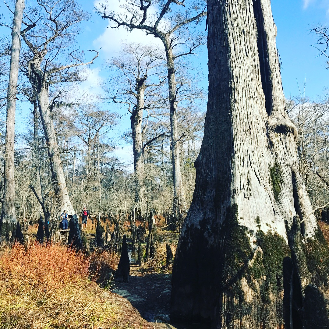three sisters swamp nc map The Three Sisters Swamp Townsend Bertram Co