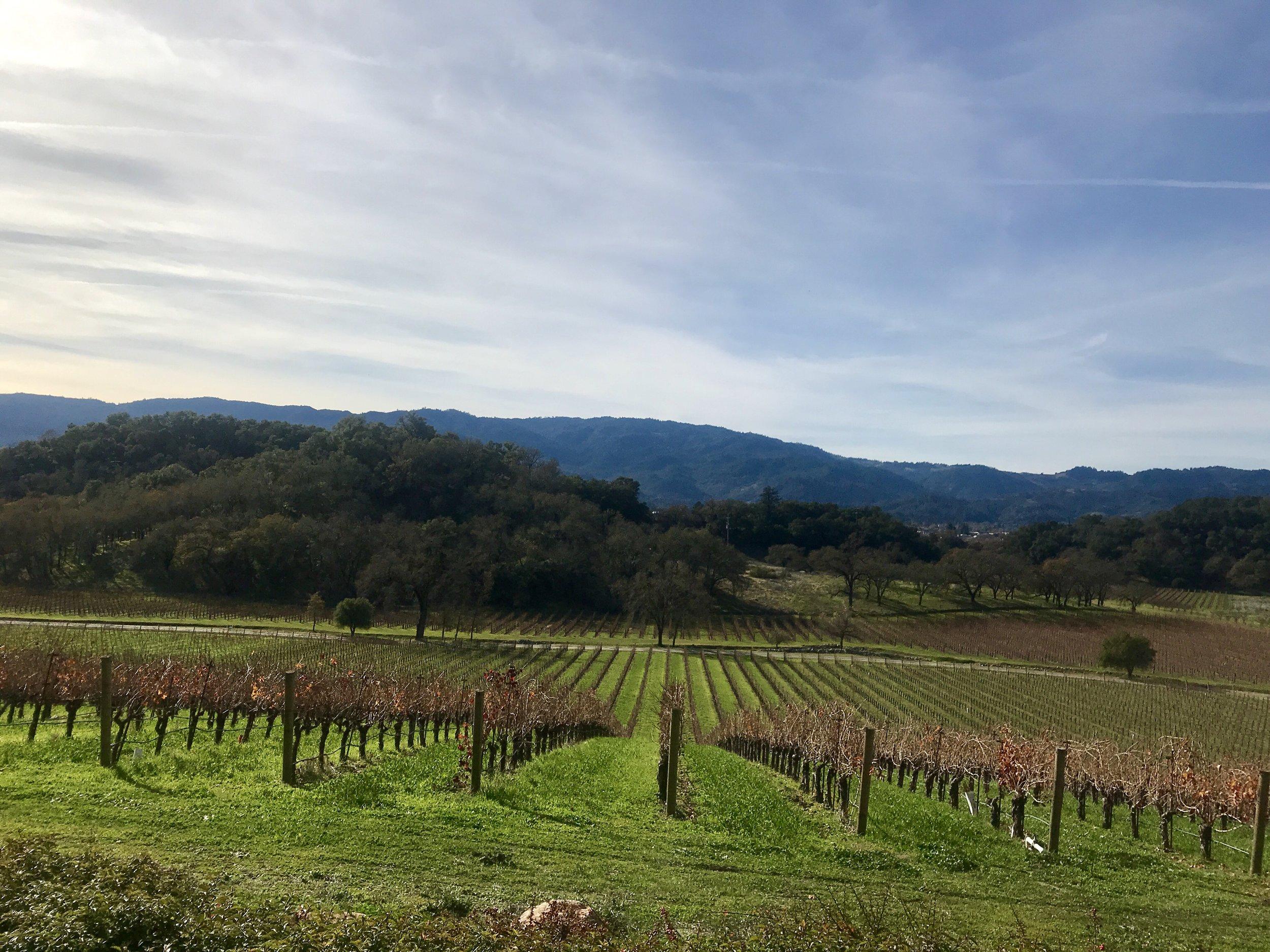 Wine country views....
