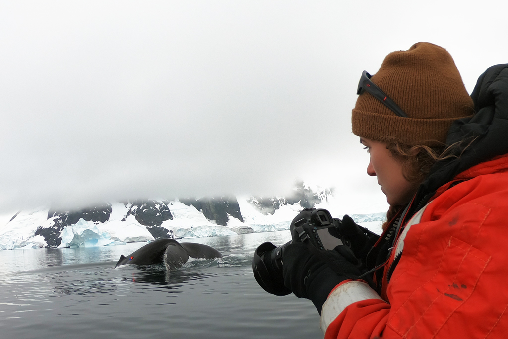 Photographing a tagged humpback whale in Andvord Bay.