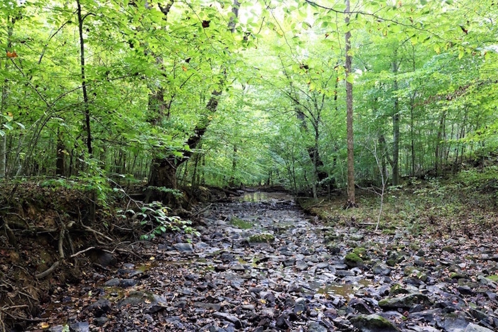 Cane Creek view September, B. Manning.jpg