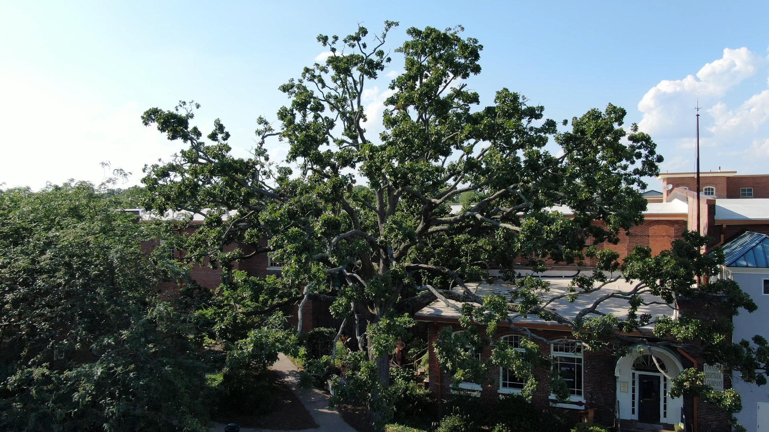 TB&CO tree arial .JPEG