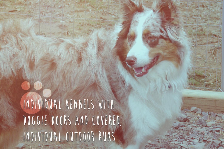 old lassie.jpg