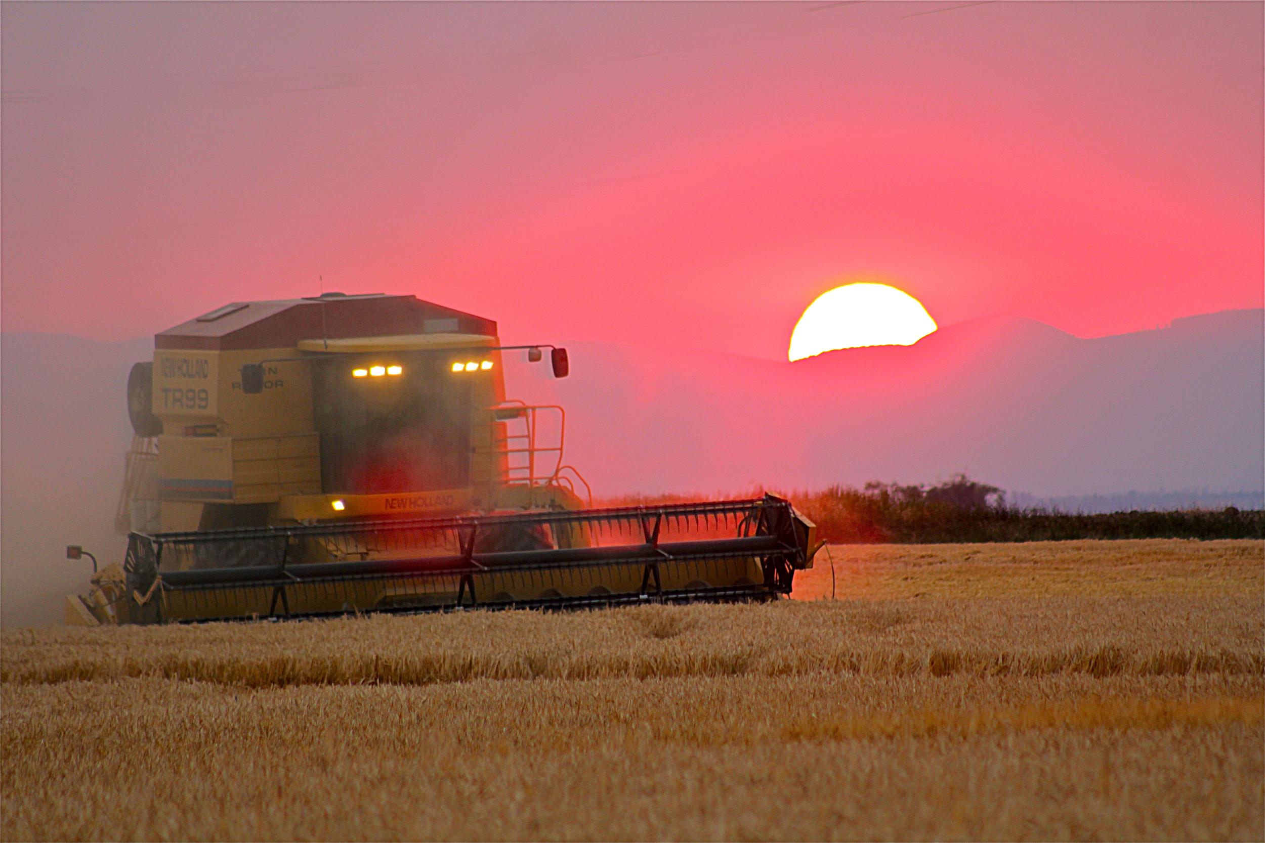 Grain harvest at Mecca Grade Estate Malt. Photo by Travis Ralls