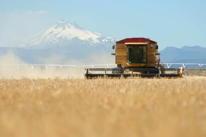 Barley being harvested at Mecca Grade Estate Malt, Mount Jefferson in the background. (Photo courtesy of Mecca Grade Estate Malt)