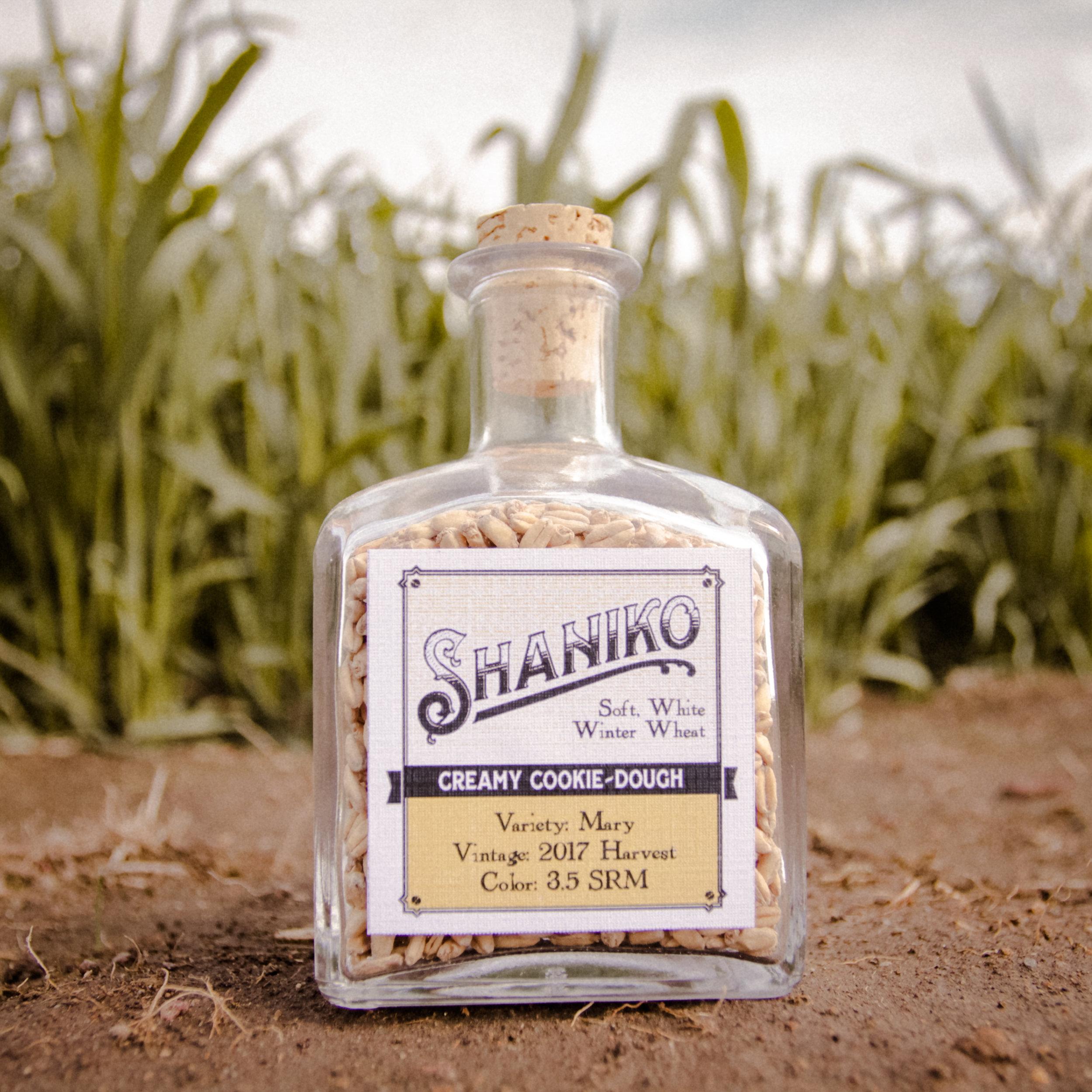 Shaniko White Winter Wheat Malt from Mecca Grade Estate Malt in Madras Oregon