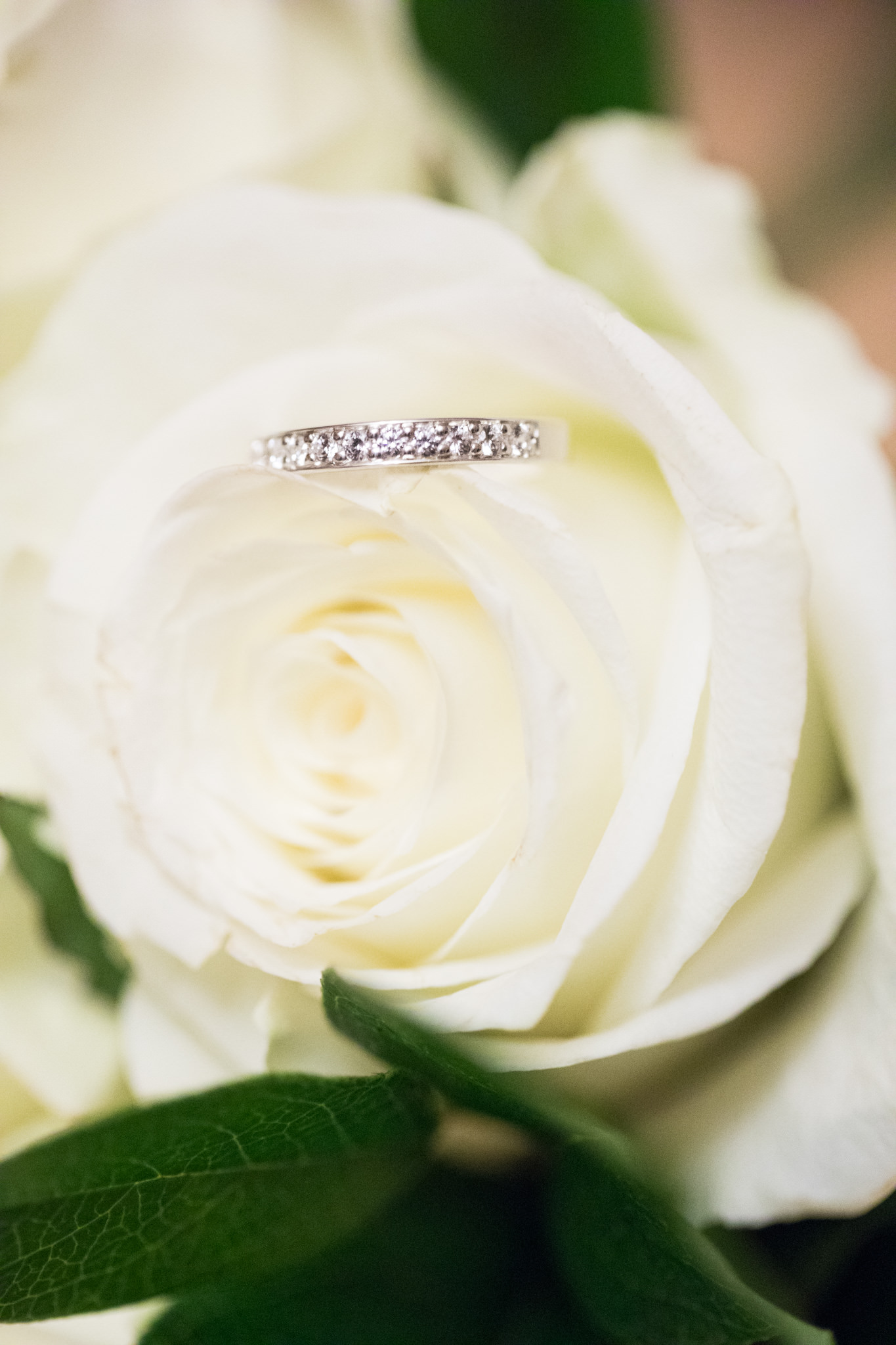 Vita rosor + ring.jpg