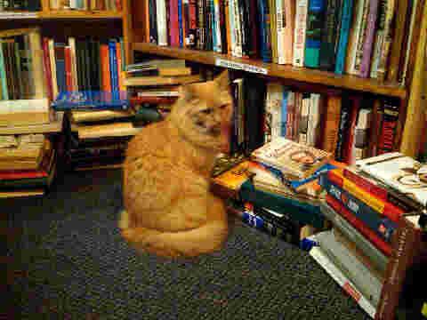 bookstore%20cat.jpg