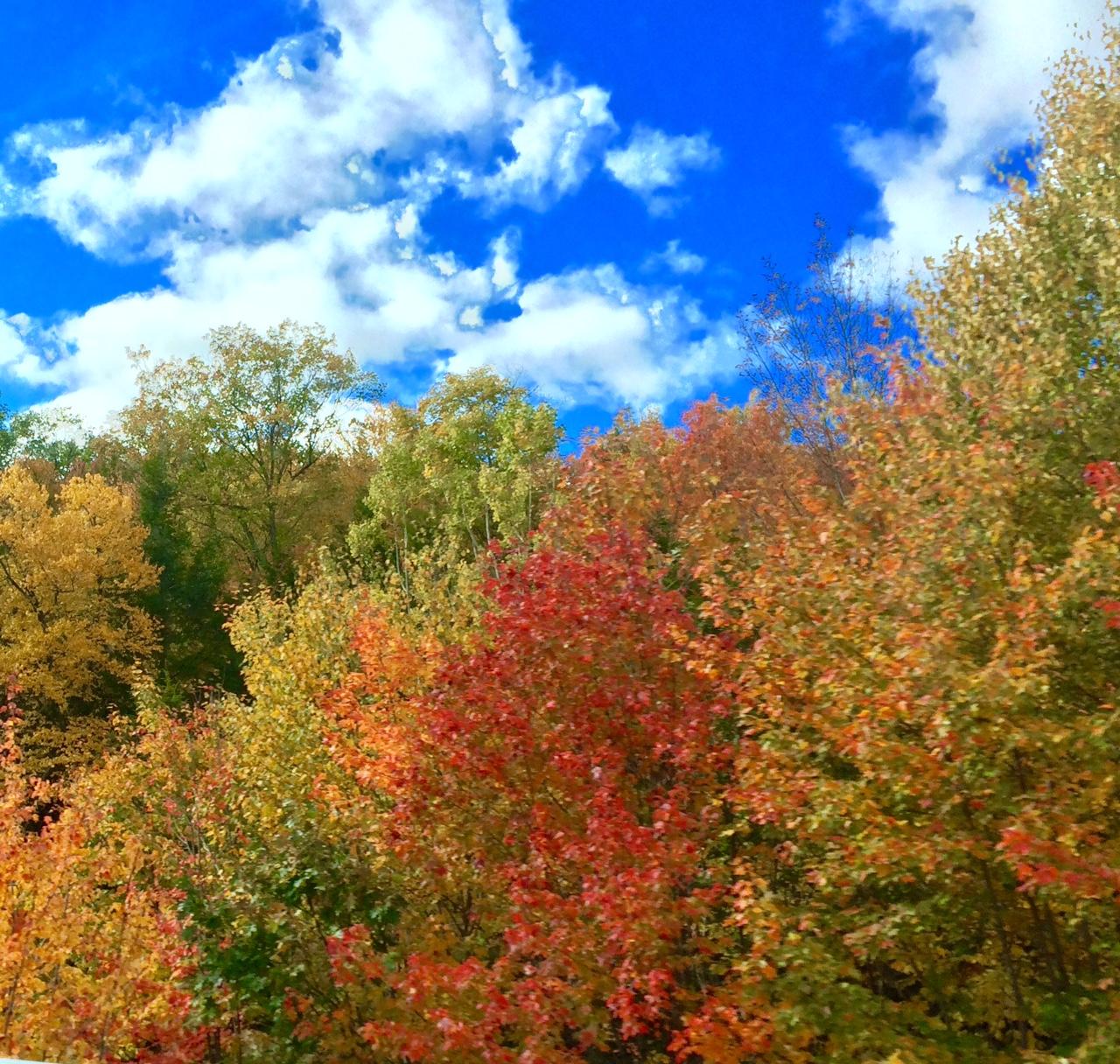 Happy Fall 2.jpg