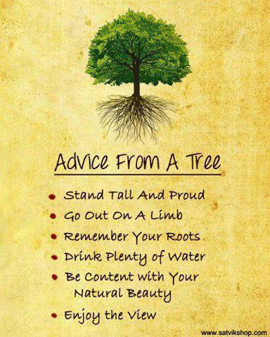 tree-knowledge.jpg