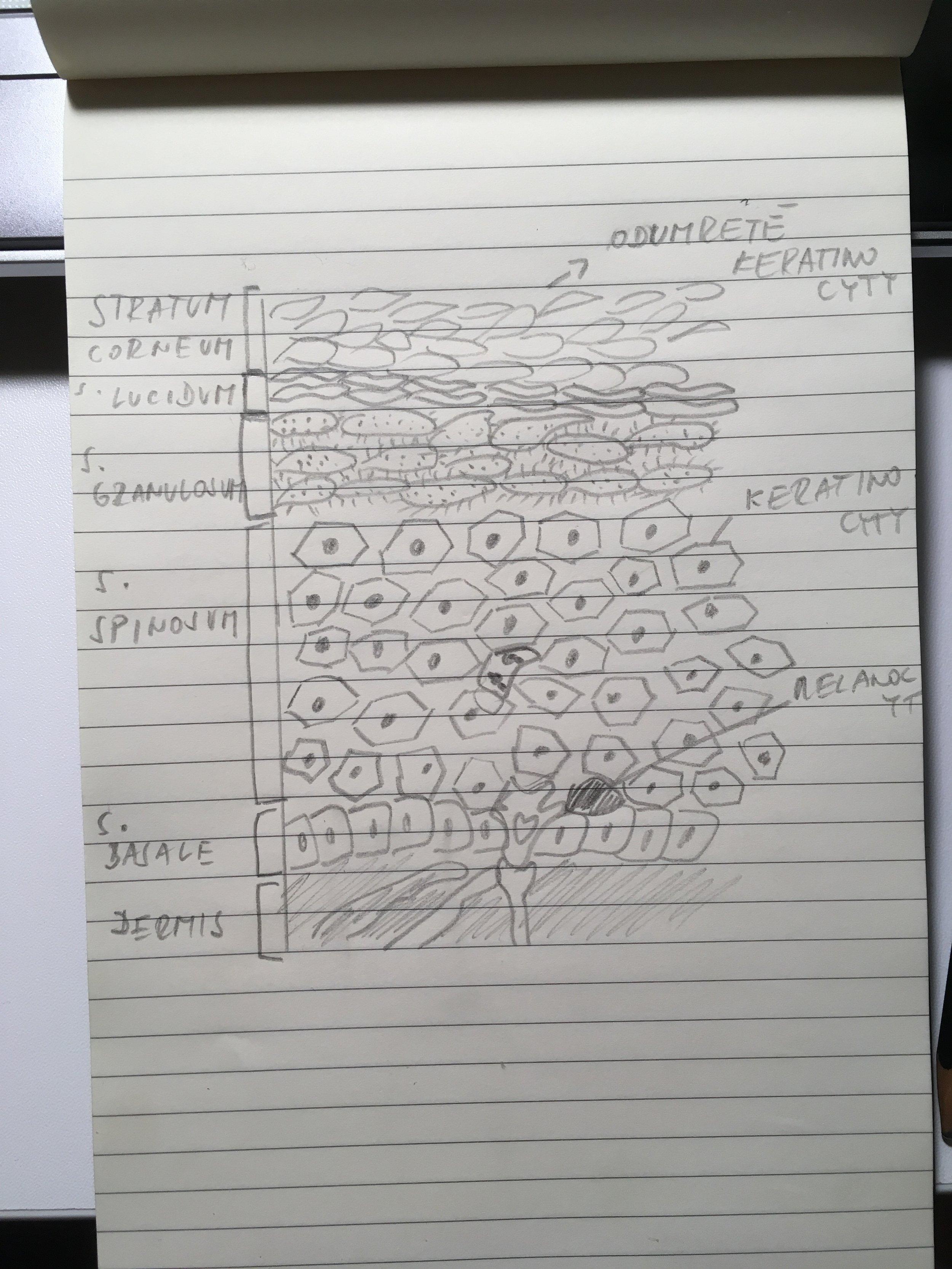 Vôbec neviem kresliť, ale aspoň neporušujem autorské práva ;)