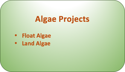 algae project.png