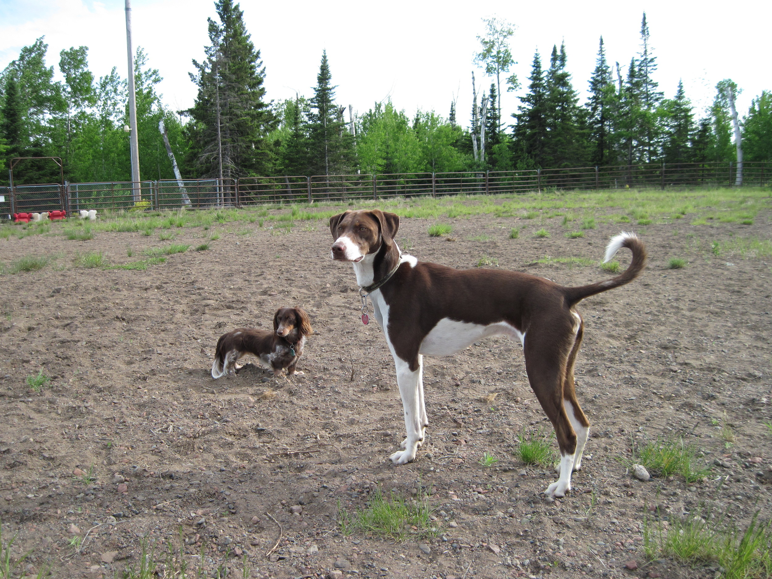 All shapes and sizes are welcome at the Gunflint Dog Park.