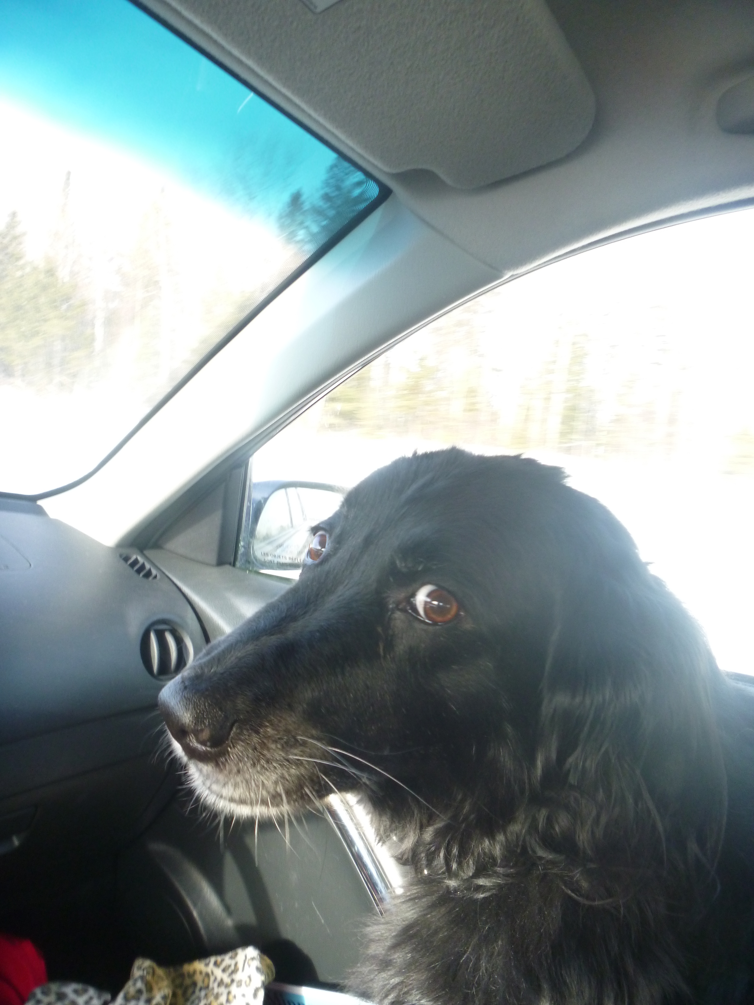 Dog is my co-pilot.JPG
