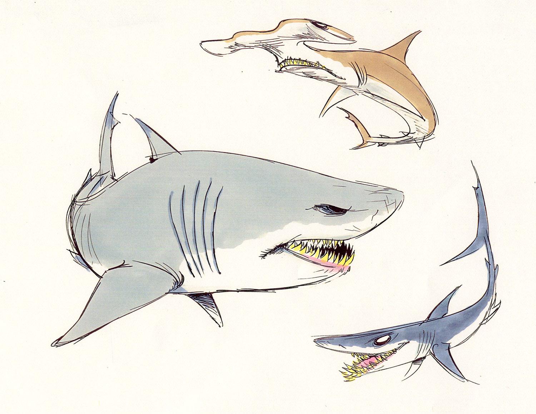 Sharks2.jpg