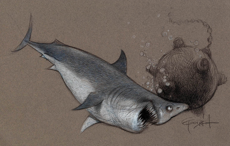 Sharks6.jpg