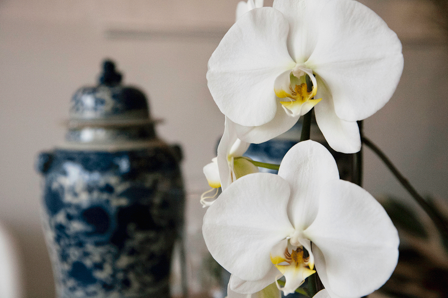 greenofgreenwich-18_SM_Orchid.png