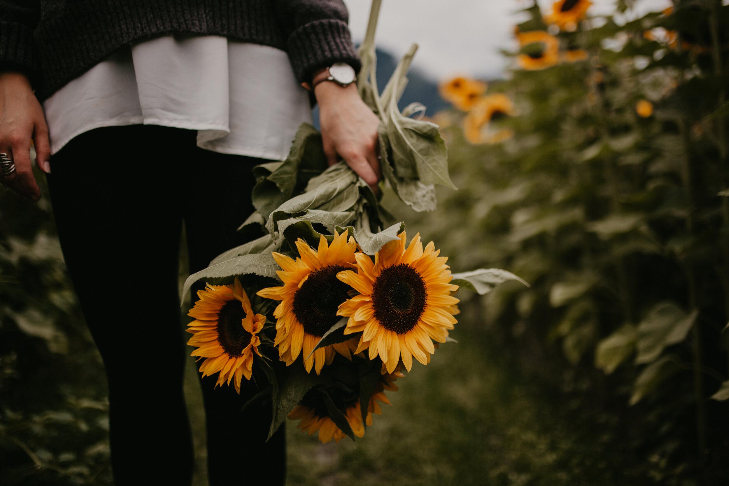 SunflowerFestival-36.jpg