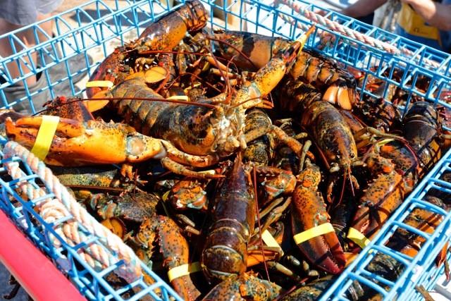 Robinson's Wharf - Fresh Lobster.jpg
