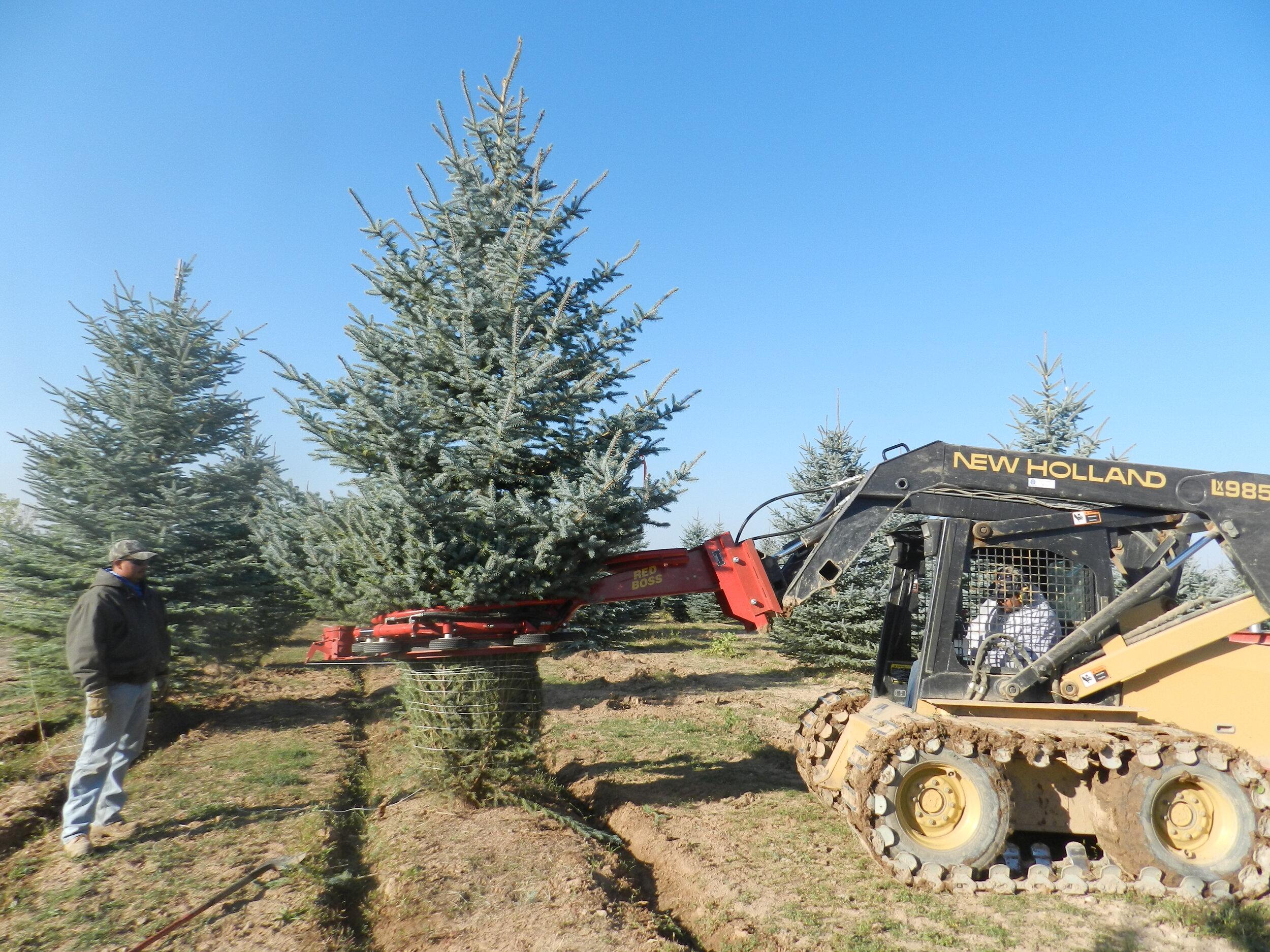 Spruce Point Tree Farm 1.jpg