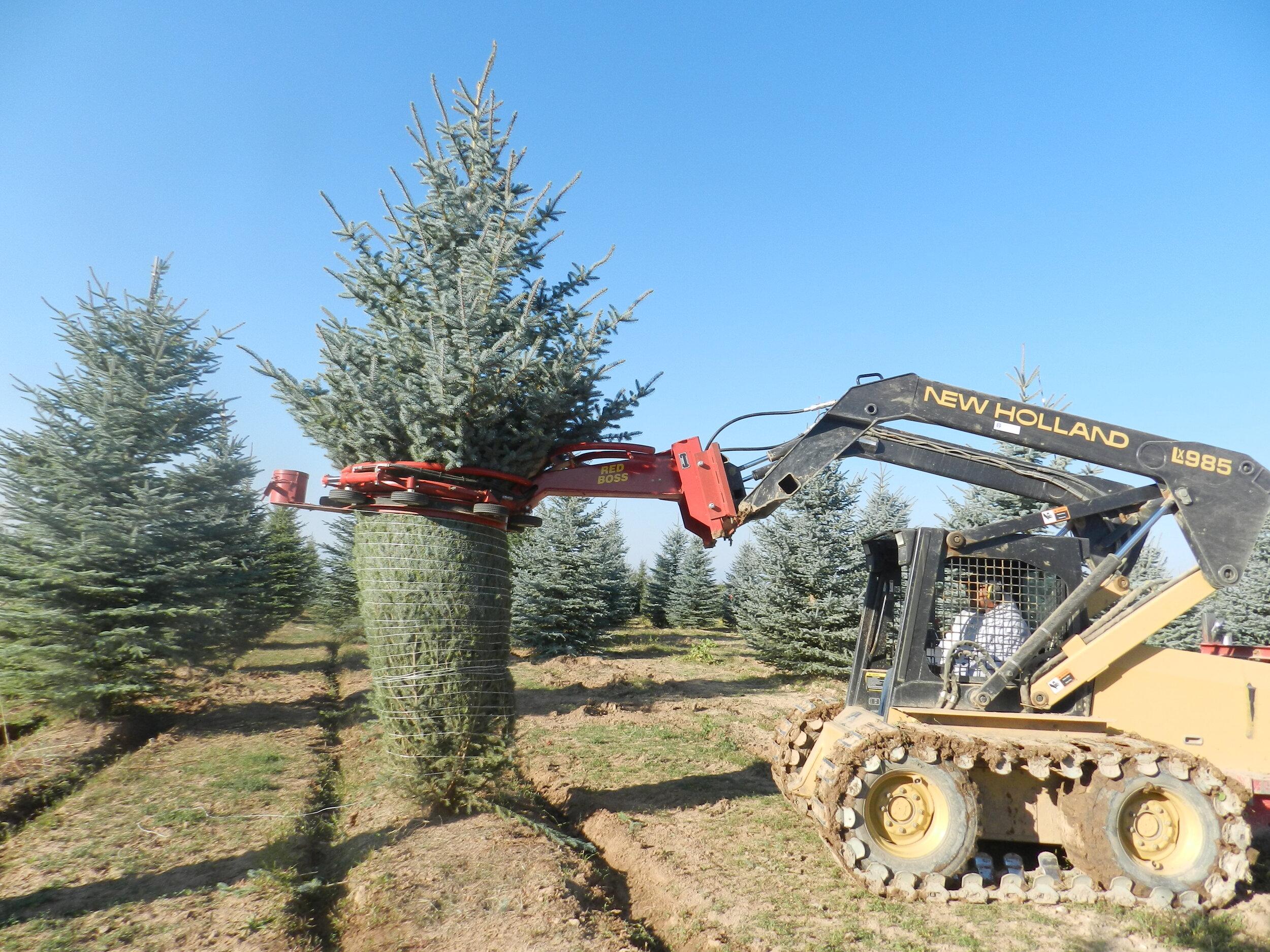 Spruce Point Tree Farm 2.jpg