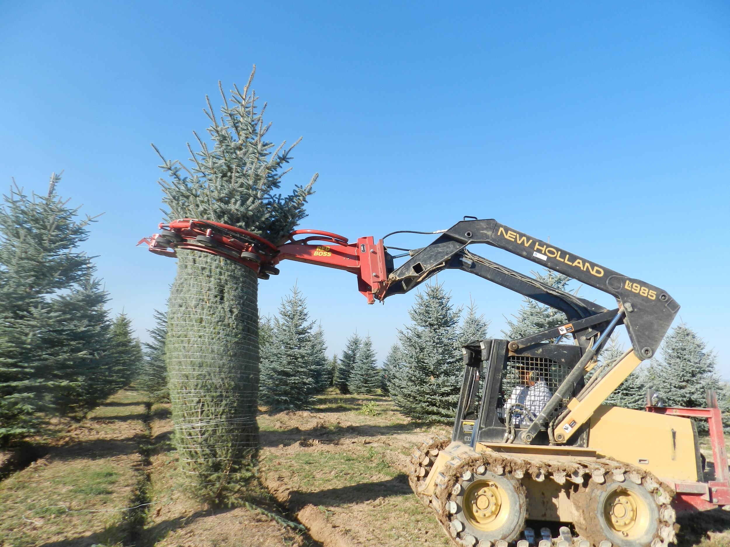 Spruce Point Tree Farm 3.jpg