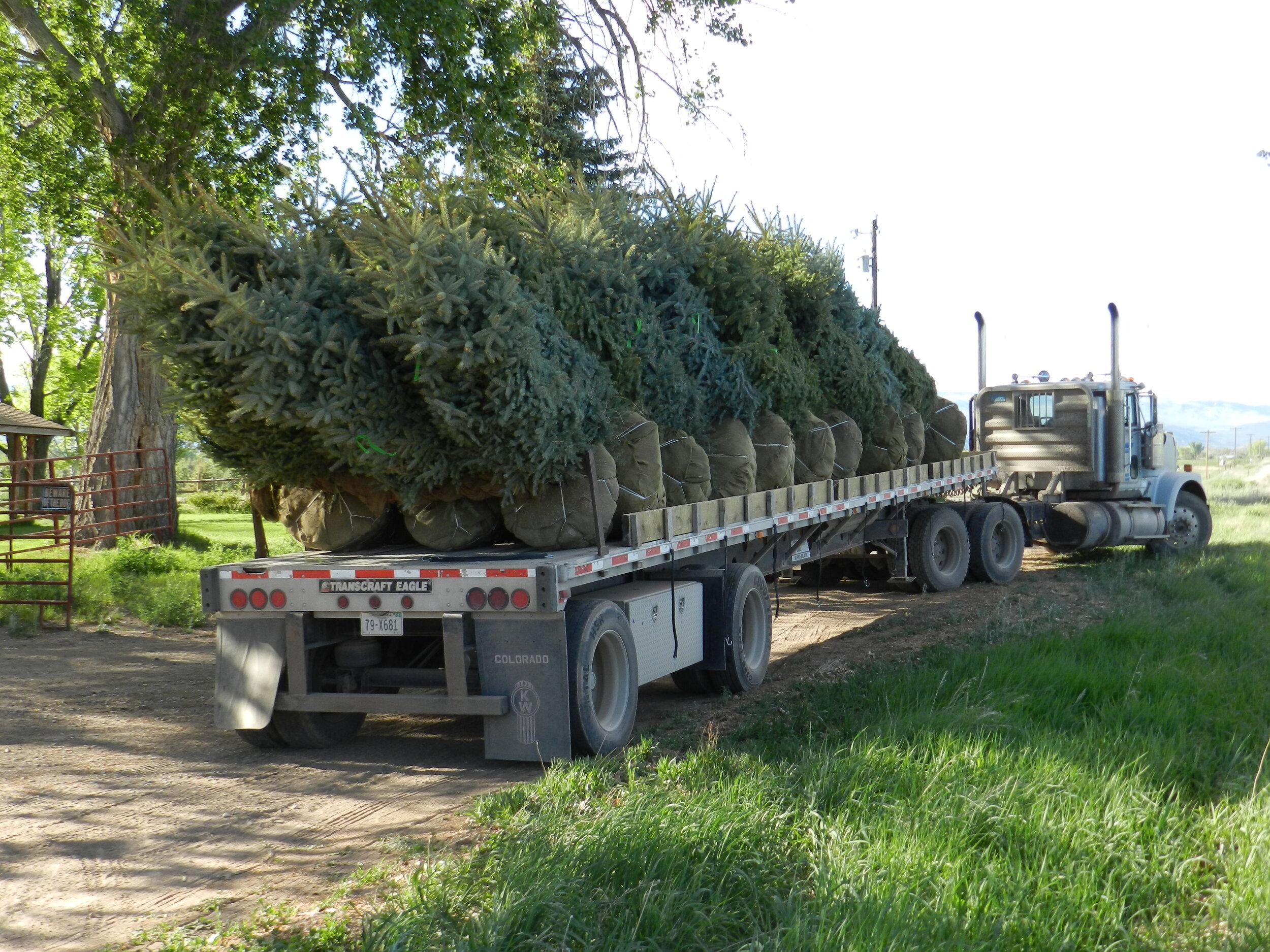 Spruce Point Tree Farm - Trees for Transport.jpg