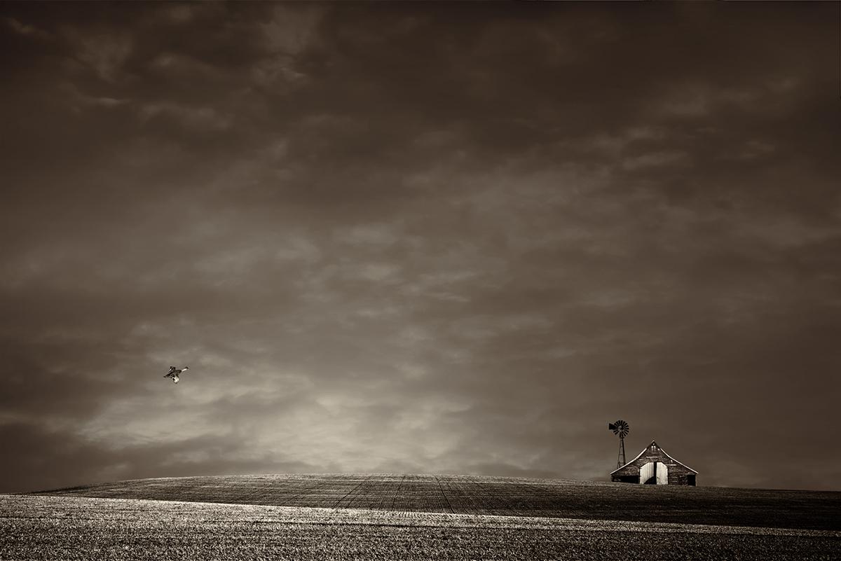 Lisa Wood,   Art of Farmland No. 7