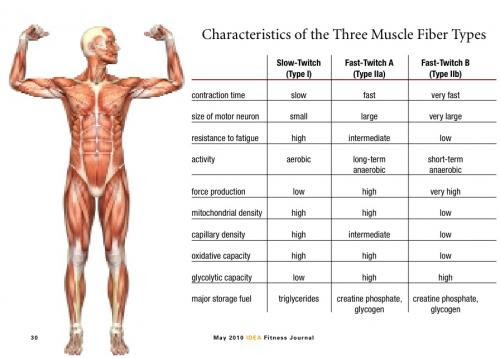 We can't do anything to give ourselves a higher composition of Type IIB muscle fiber, but that doesn't mean we can't train to make our sprint better
