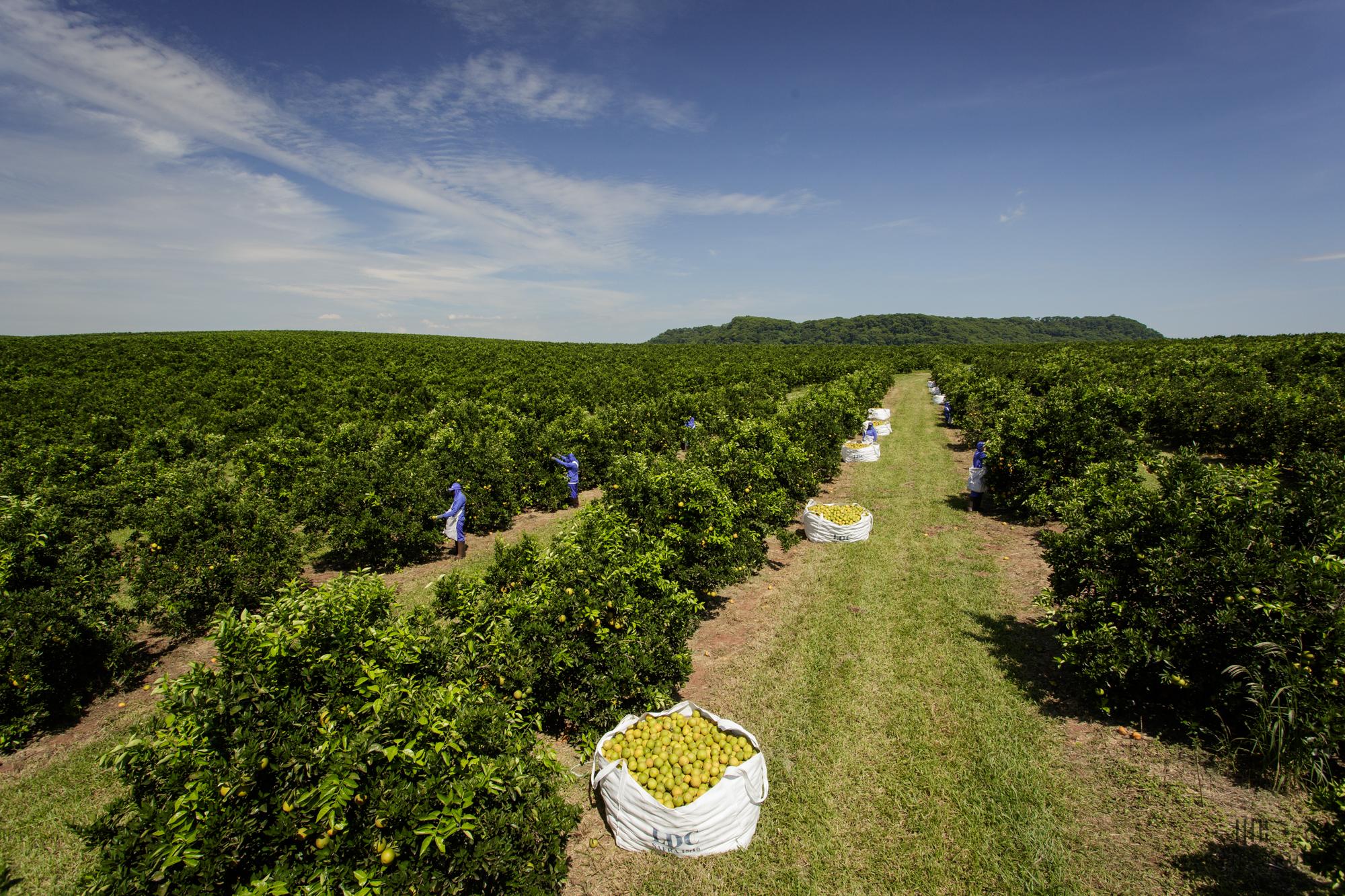 Fazenda Monte Belo - Orange Farm