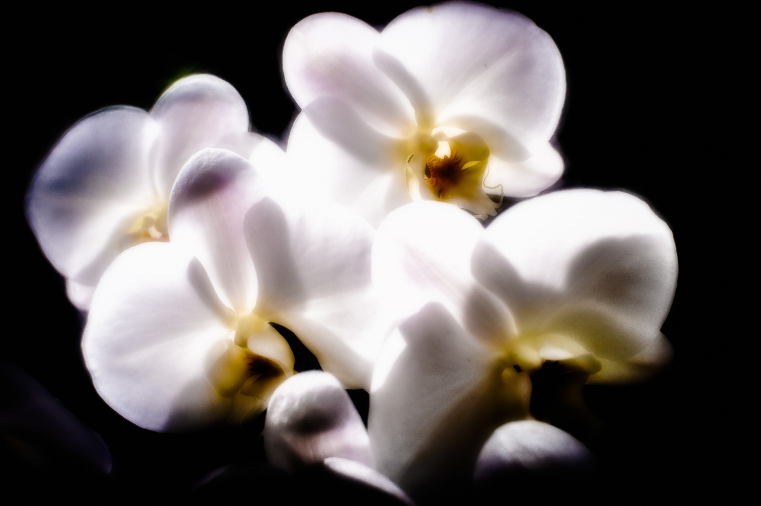 2012-04-06_NYC-Botanical-Gardens_35-Edit.jpg