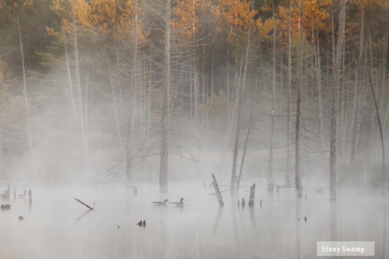StoneySwamp1.jpg