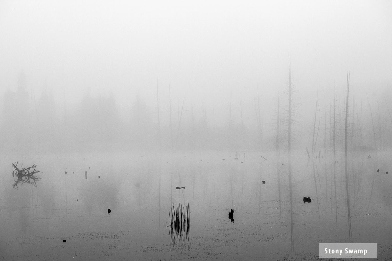 StoneySwamp3.jpg