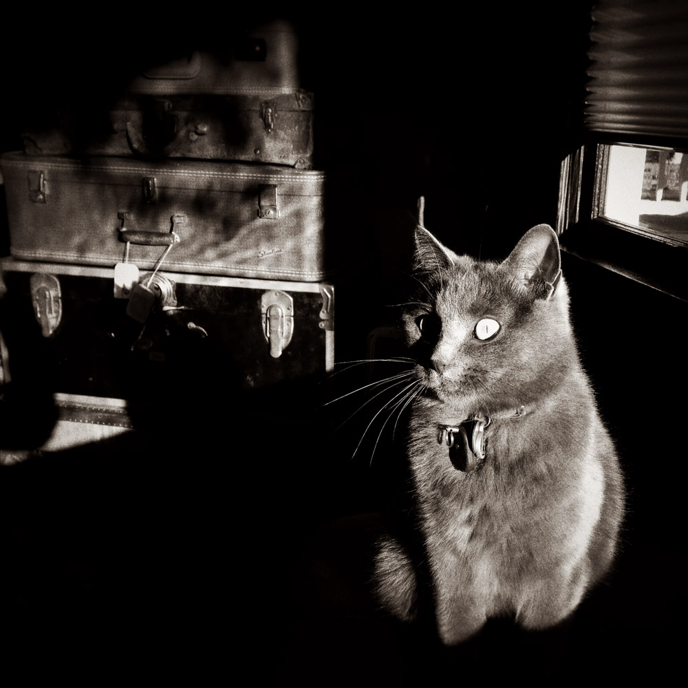 campbell-salgado-studio_hazel-the-studio-cat_portrait-photography_7011.jpg