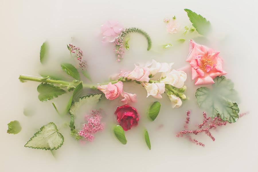 campbell-salgado-studio_milk-bath-photography-flowers_pink.jpg
