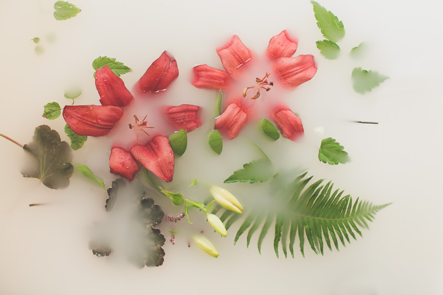 campbell-salgado-studio_milk-bath-photography-flowers_red.jpg