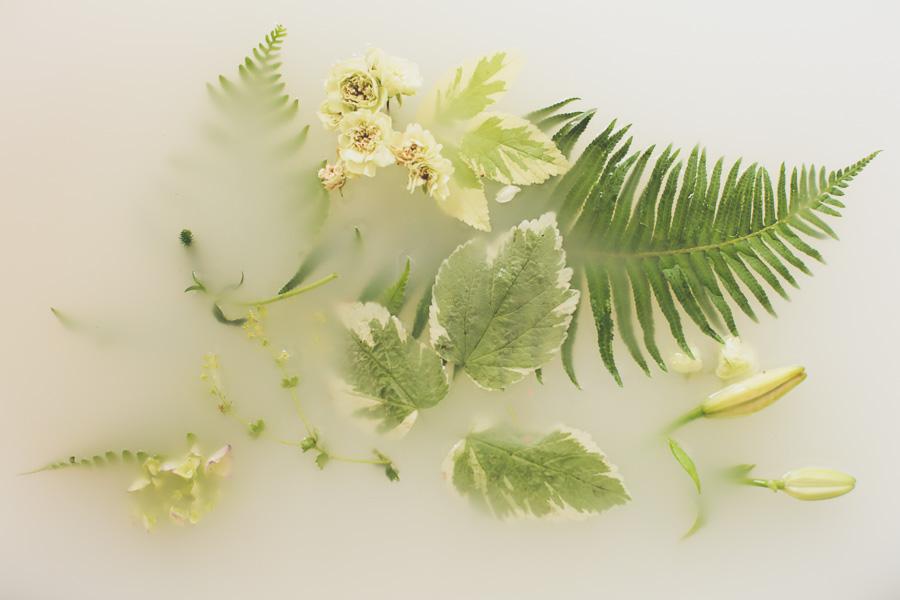 campbell-salgado-studio_milk-bath-photography-flowers_green1650.jpg