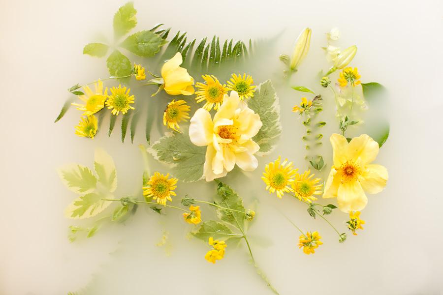 campbell-salgado-studio_milk-bath-photography-flowers_yellow.jpg