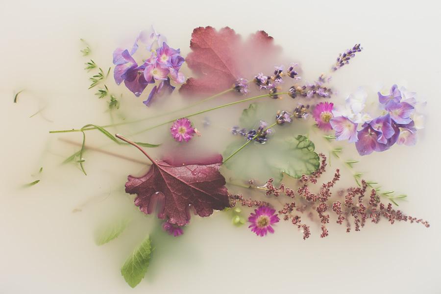 campbell-salgado-studio_milk-bath-photography-flowers_purple1643.jpg