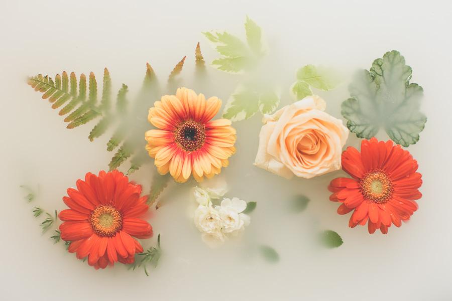 campbell-salgado-studio_milk-bath-photography-flowers_orange1639.jpg