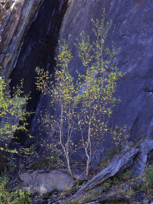 Ballachulish Slate Quarry 1