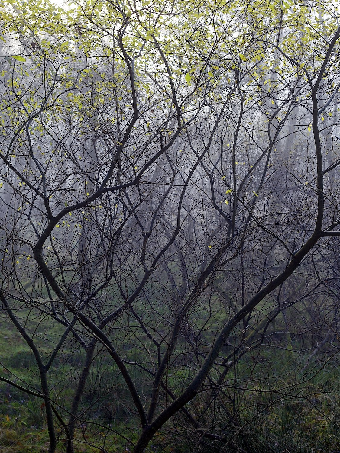The Misty Heart of The Woods