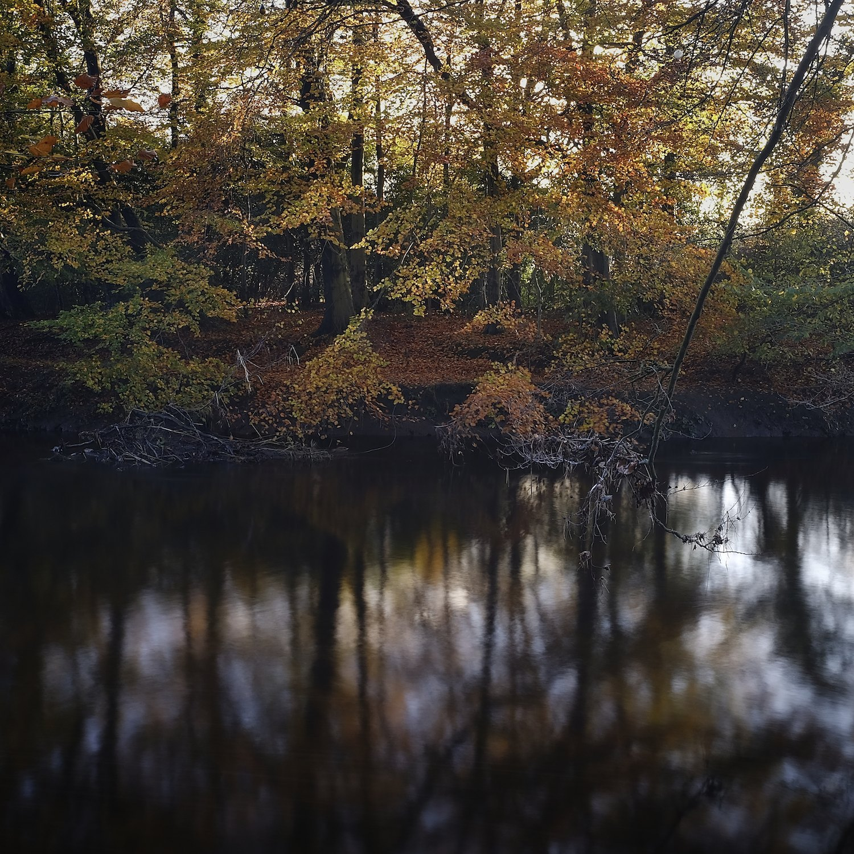 Christopher-Swan-Pollok-Park-Glasgow-2014-Novemebr 62014-11-09.jpg