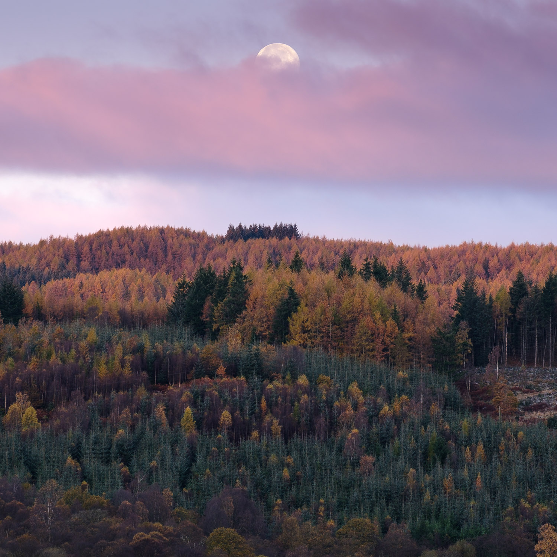 Christopher Swan-Perthshire-Autumn-1.jpg