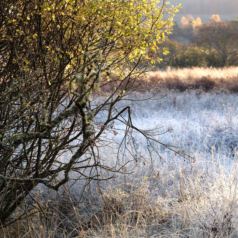 Christopher Swan-Perthshire-Autumn-3.jpg