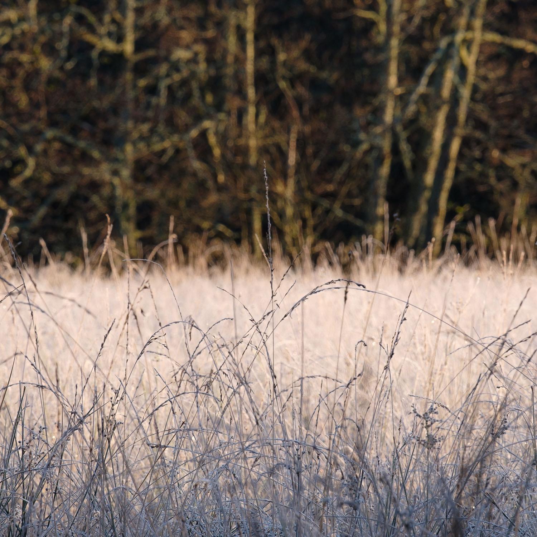 Christopher Swan-Perthshire-Autumn-4.jpg