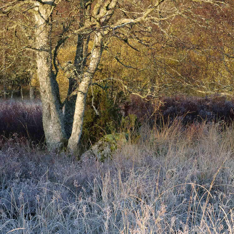Christopher Swan-Perthshire-Autumn-6.jpg