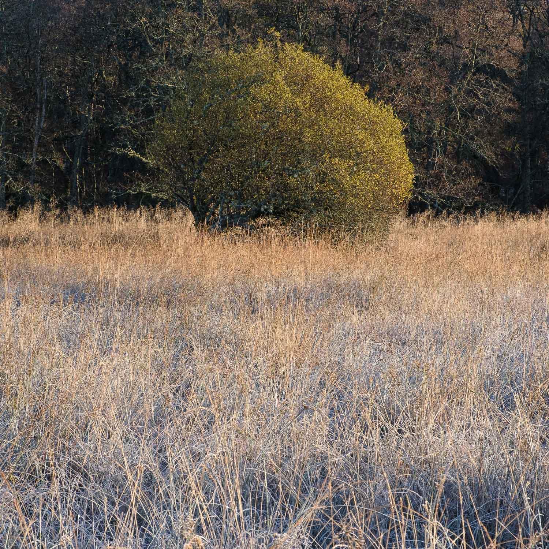 Christopher Swan-Perthshire-Autumn-7.jpg