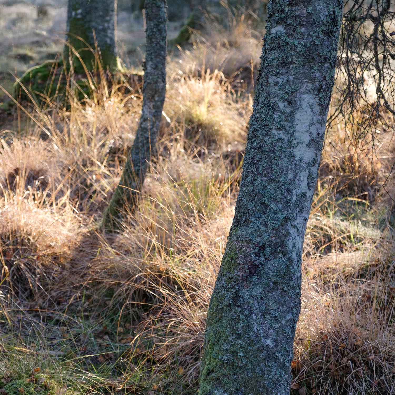 Christopher Swan-Perthshire-Autumn-8.jpg